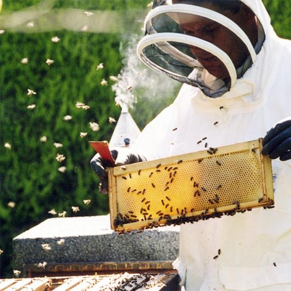 apicultor (1)